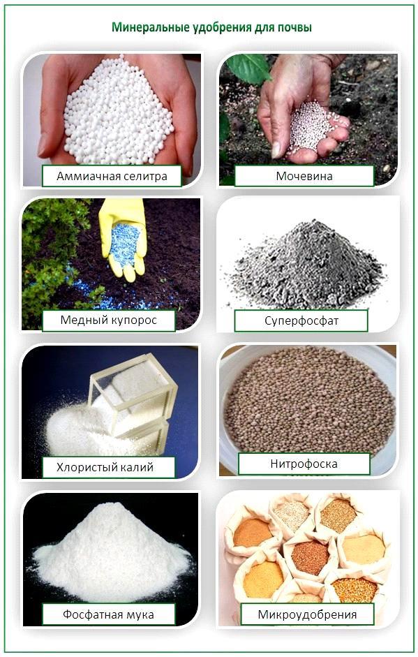 Какие минеральные удобрения нужны для картофеля
